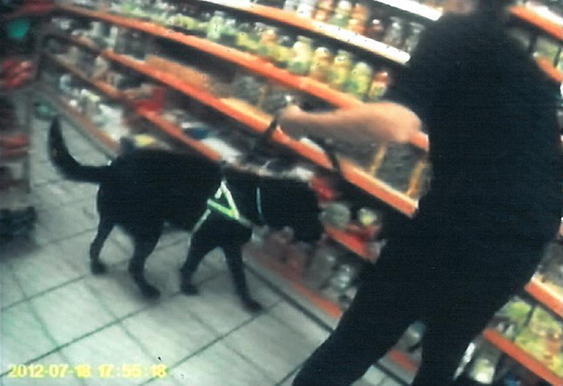 Indie the tobacco detection dog at work during a city raid. Photo: Lincolnshire Trading Standards.