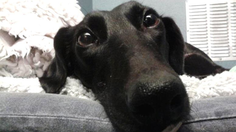 Flo the lurcher was found on a river bank in North Hykeham amid reports of hare coursing.