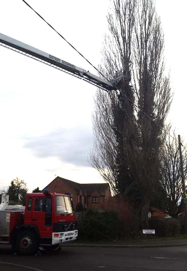 Crews from North Hyekham and a hydraulic platform from Lincoln South attended the cat rescue. Photo: Natalie Davison