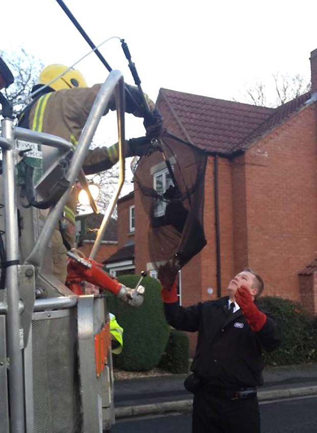 The black cat was reunited with its owners after firefighters and RSPCA helped rescue it. Photo: Natalie Davison