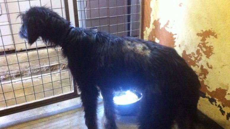 Photo: RSPCA Lincolnshire and Mid Lincoln