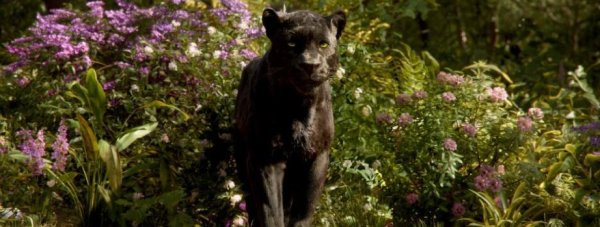 Still of Ben Kingsley as Bagheera in The Jungle Book. Photo by Disney.