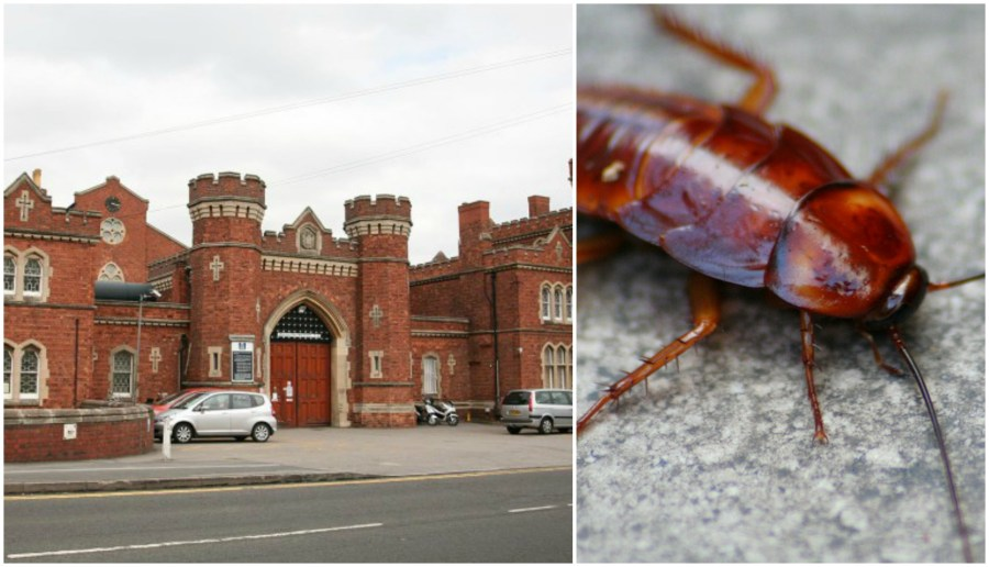 Lincoln prison cockroaches Collage