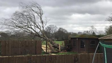 Another tree has fallen in Skellingthorpe. Photo: Declan Corner