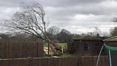 Another tree has fallen in Skellingthorpe. Photo: Declan Corner
