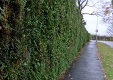 Lincoln village hedge cutting mystery continues