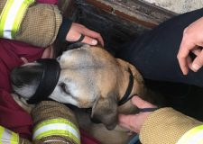 Firefighters rescue dog from manhole
