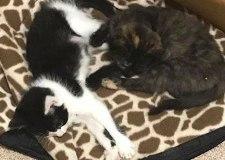 Missing cats found dead in bin