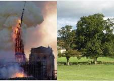 Lincolnshire estates donate oak for Notre Dame repairs