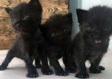 Five kittens 'dumped in bin bag' and left to rot