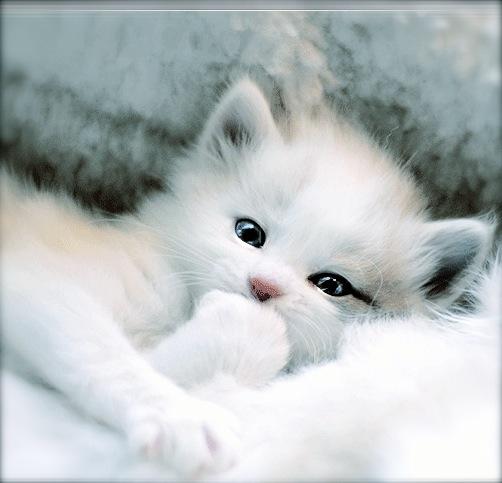 cute kitten wants all the lint screen