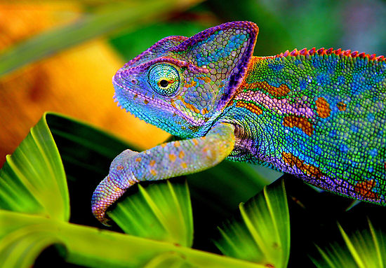The Chameleon Candidate