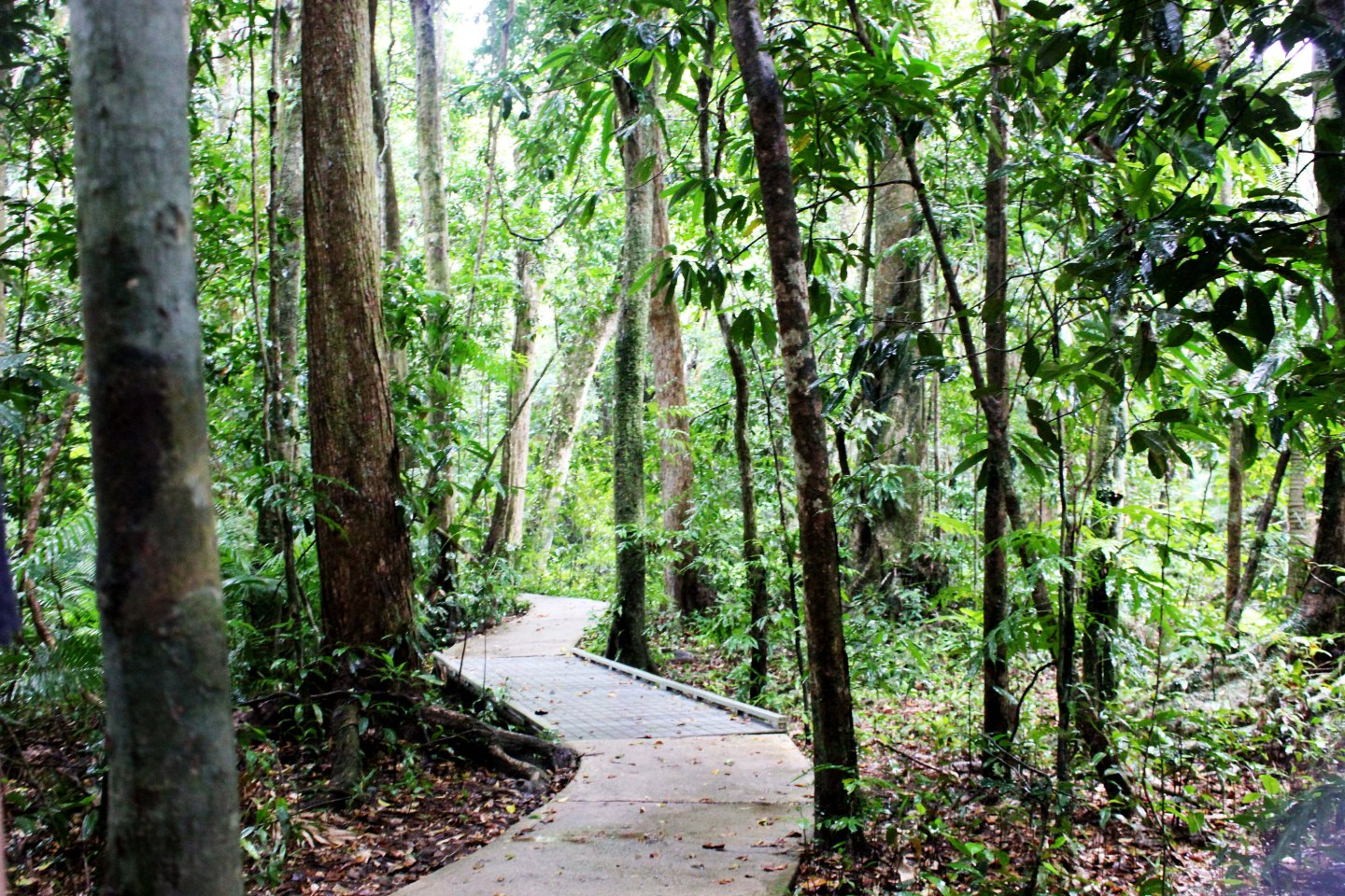 Cape Tribulation Day Tour with Active Tropics Explorer