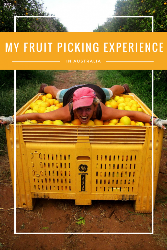 My fruit picking experience in Australia - The Murray River Queen