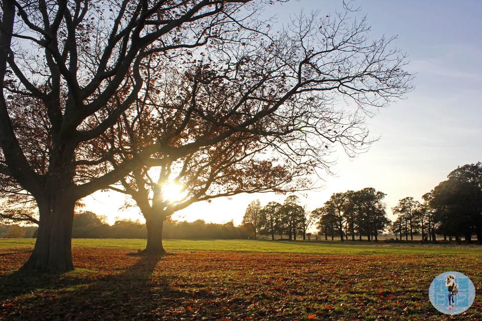 Richmond Park Photo Essay