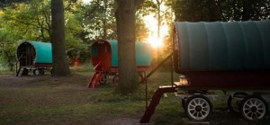 quirky accommodation with canopy and stars copper-beech-glade-smphoto_106_cs_gallery_preview