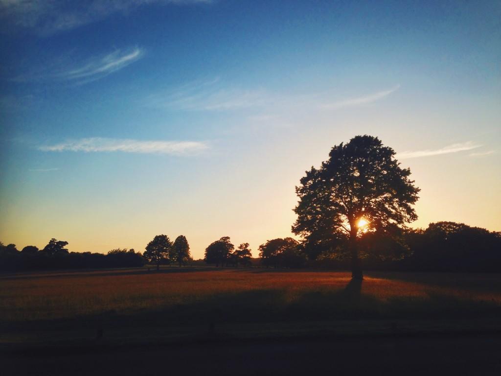 sunset in richmond park