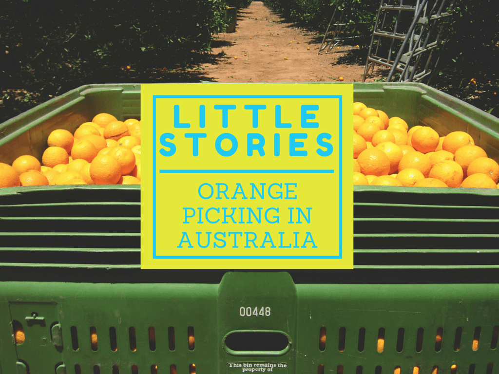 Little Stories: Orange Picking in Australia