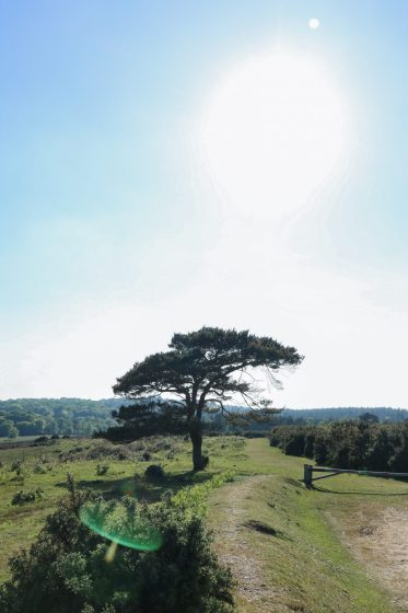 A guide to a staycation in the New Forest