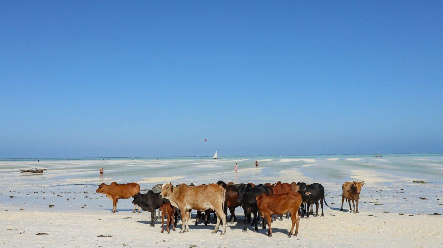 Budget for a Week in Zanzibar