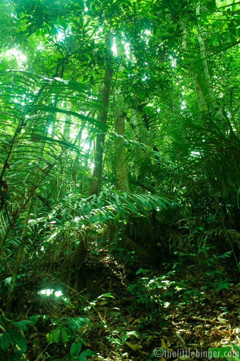Admire the beauty of nature in Mt Makiling.