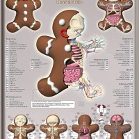 "Jason Freeny  ""Gingerbread Man Dissected"""