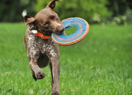 Running with her frisbee