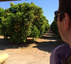Matt looking at an orange grove