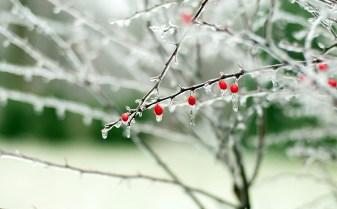 1526-frozen-berries