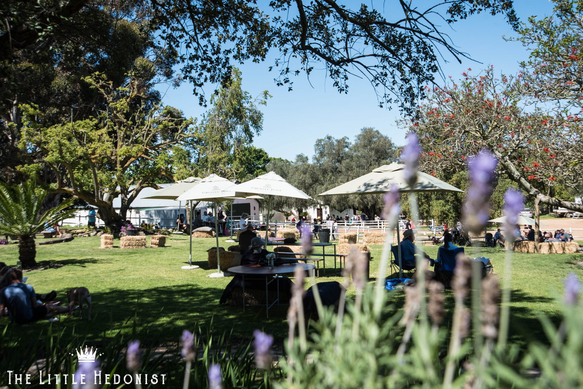 {NEWS} Don't miss Groote Post's November Country Market!