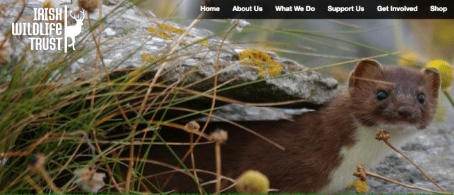 IWT website