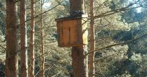 Den Box in Forest