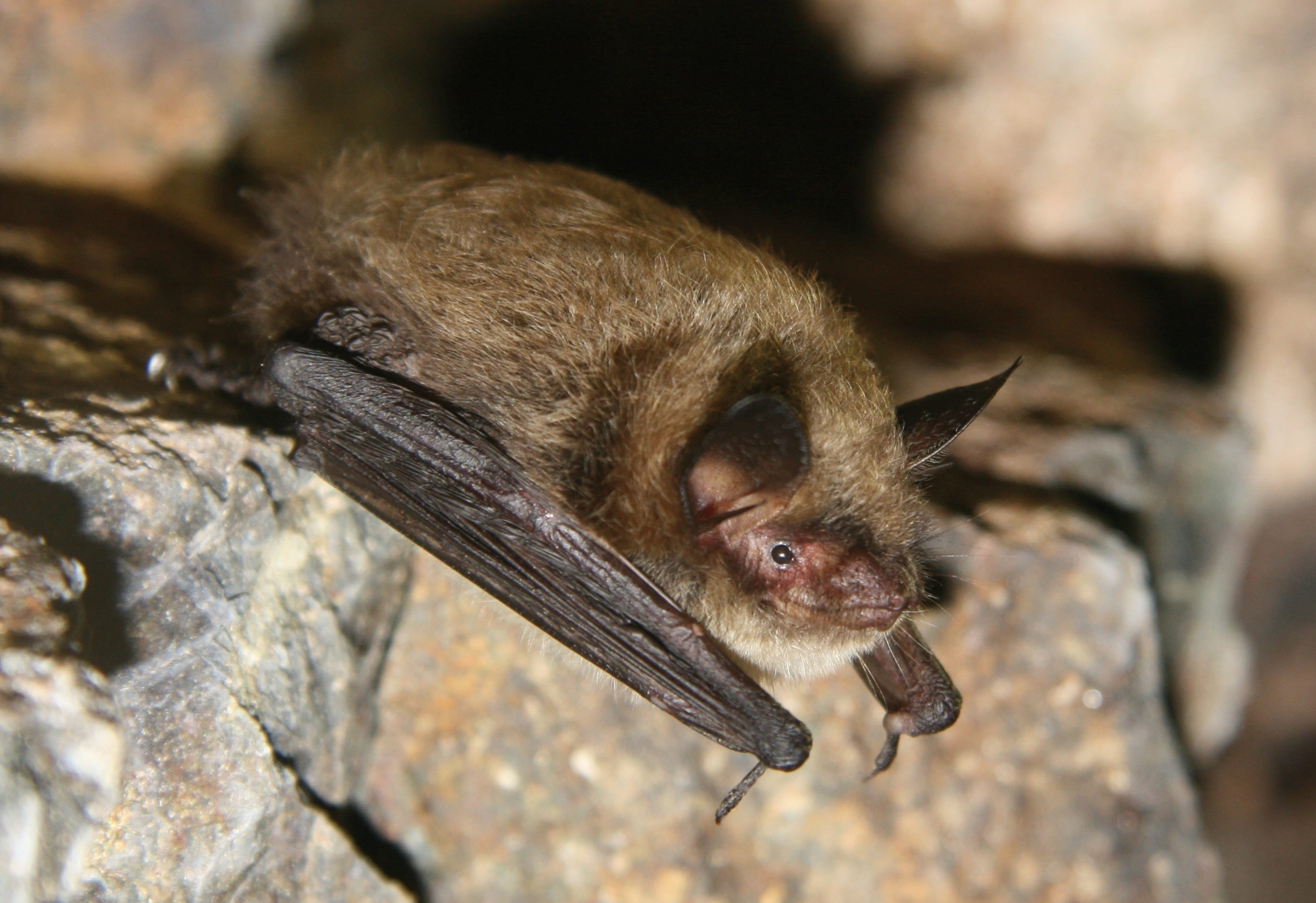 Looking At What Happened To Bats in North America