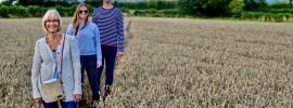 Smiling people walking on path through ripe wheat crop