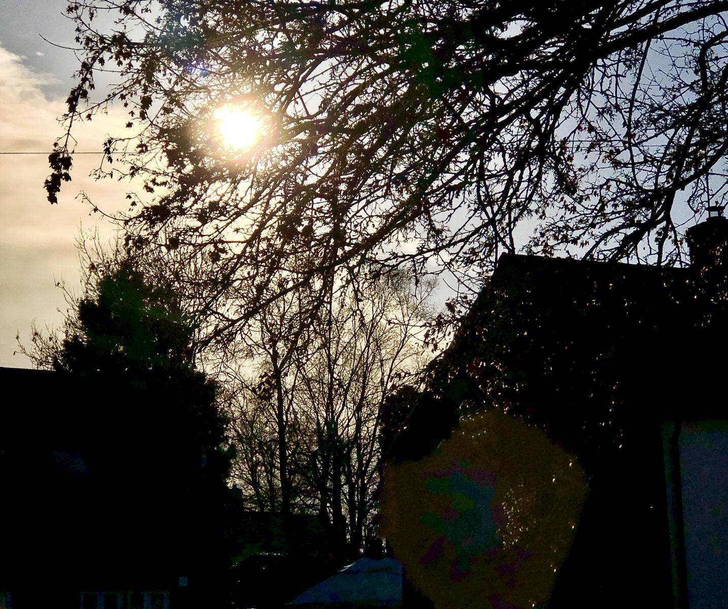 Sunburst through dark winter trees