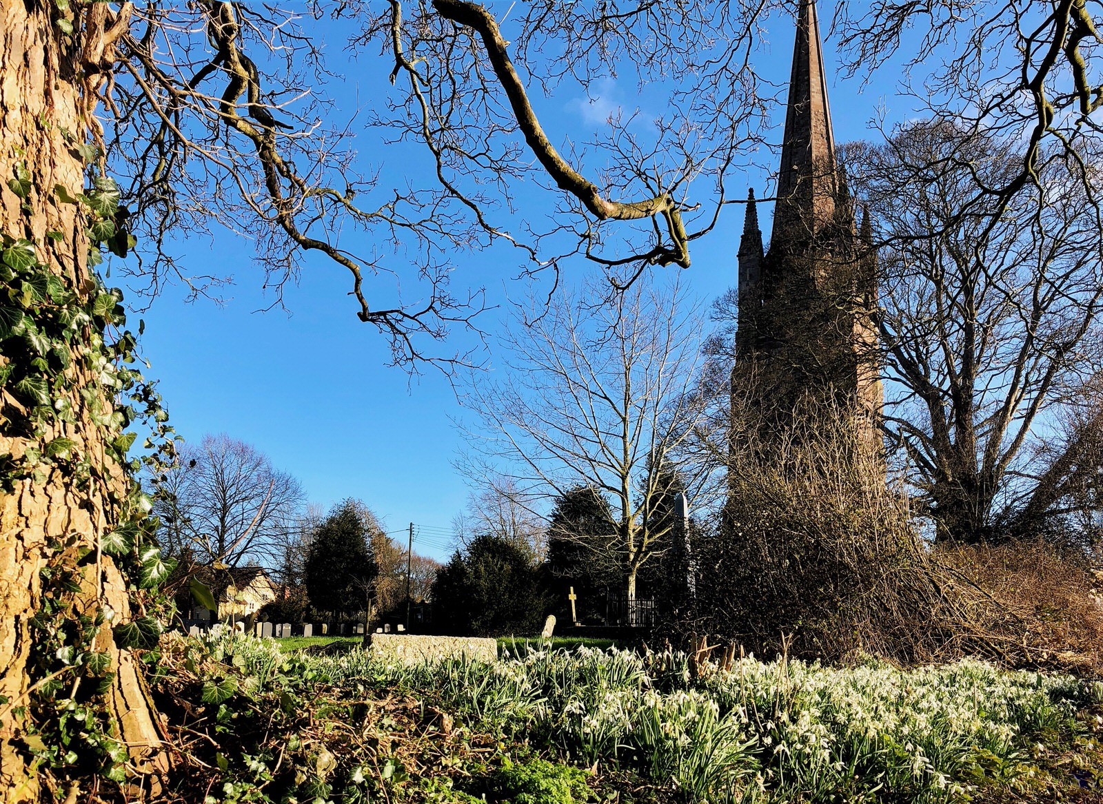 Snowdrops with church yard in background