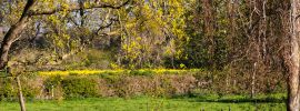 Herefordshire countryside: Spring colours