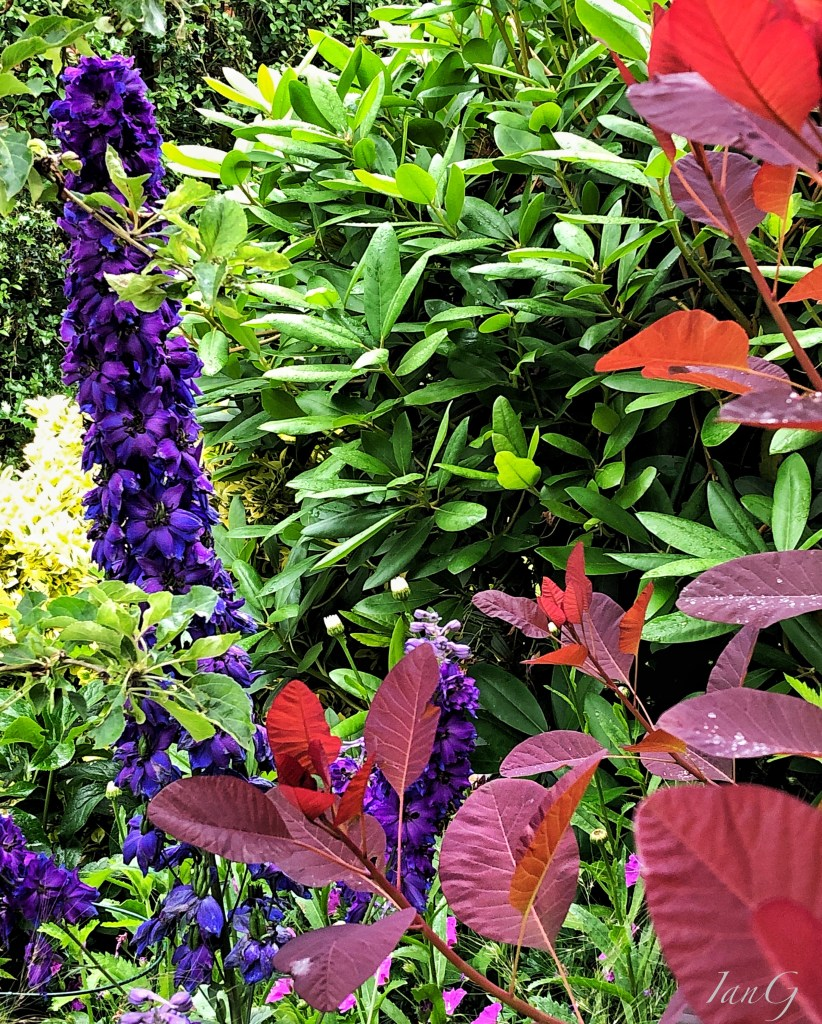 Vibrants green, yellow, purple and deep blue in flower bed