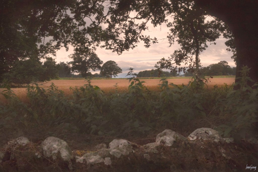 Misty glow over field of ripe wheat viewed over stone wall in evening light
