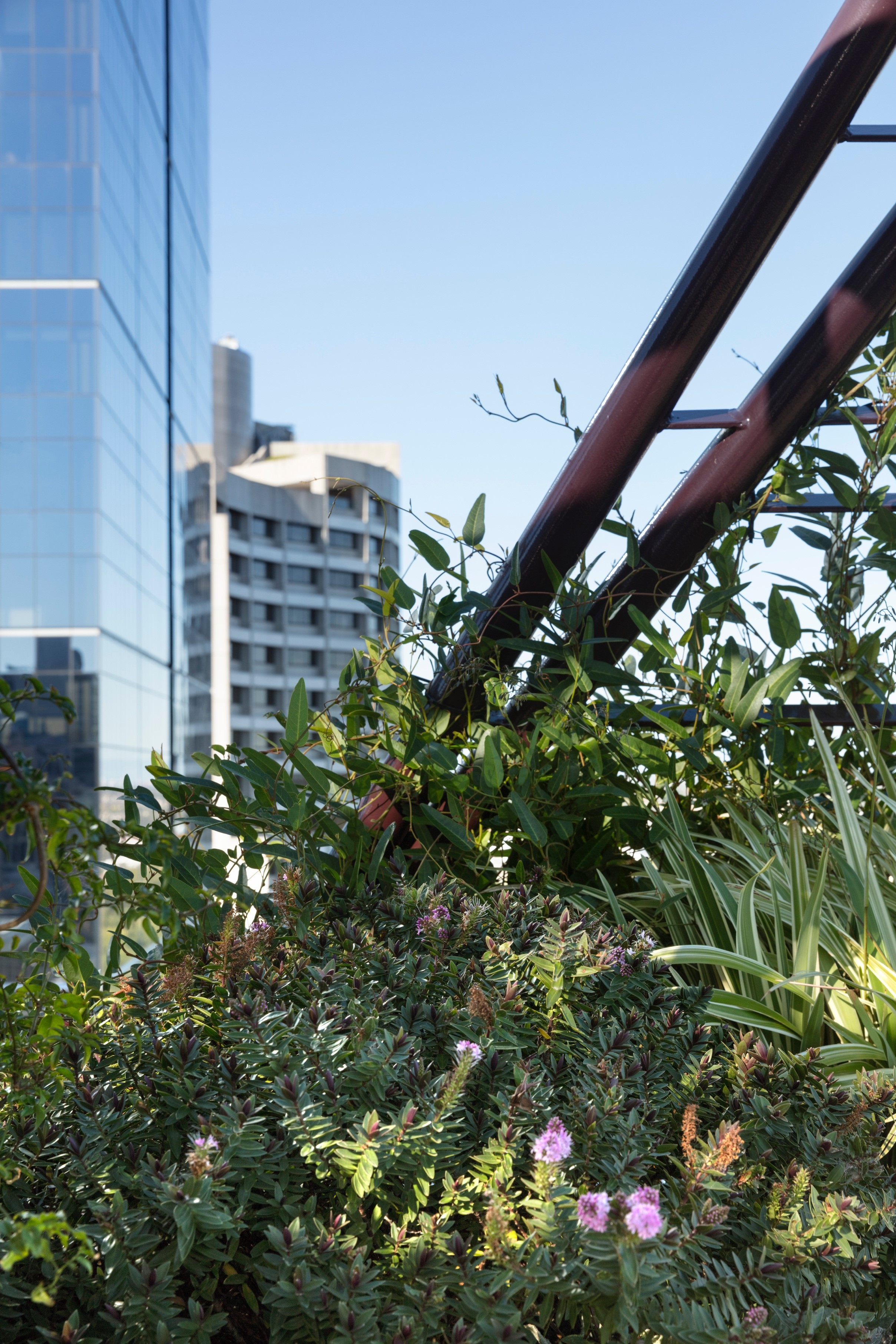 Gallery Of Phoenix Rooftop Garden By Bent Architecture Local Australian Architecture & Design Melbourne, Vic Image 2