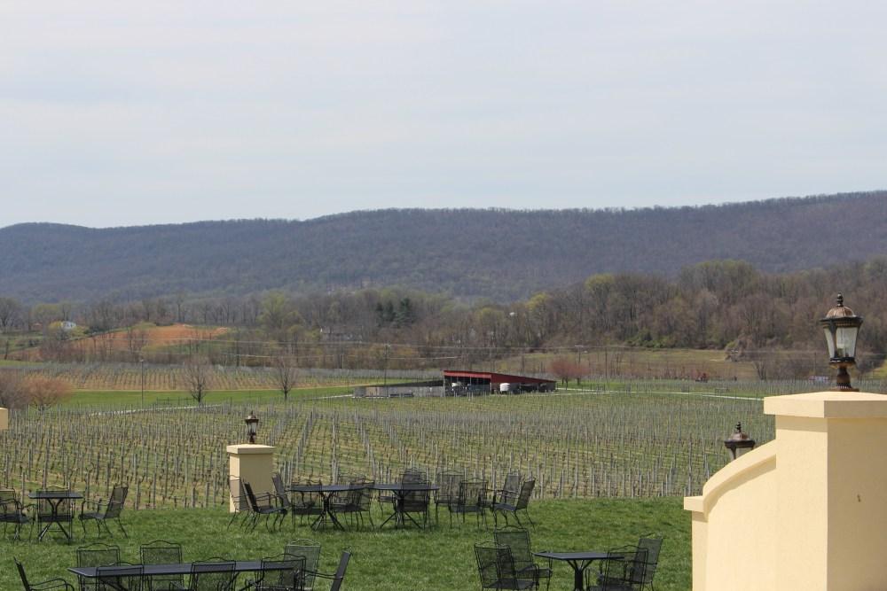 Vines at Breaux