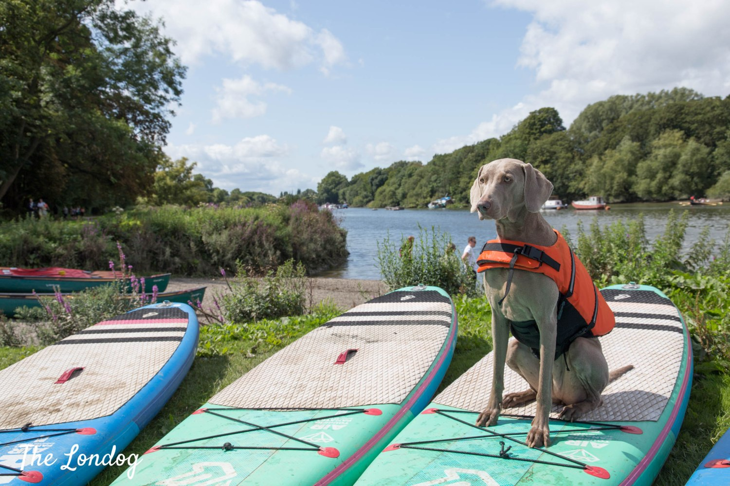 Photo of dog sitting on a stand-up paddle board in Richmond