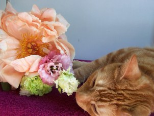 Peony and Tootsie the ginger ca The London Flower Lover