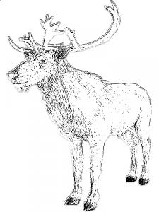 Princeof808_sketch