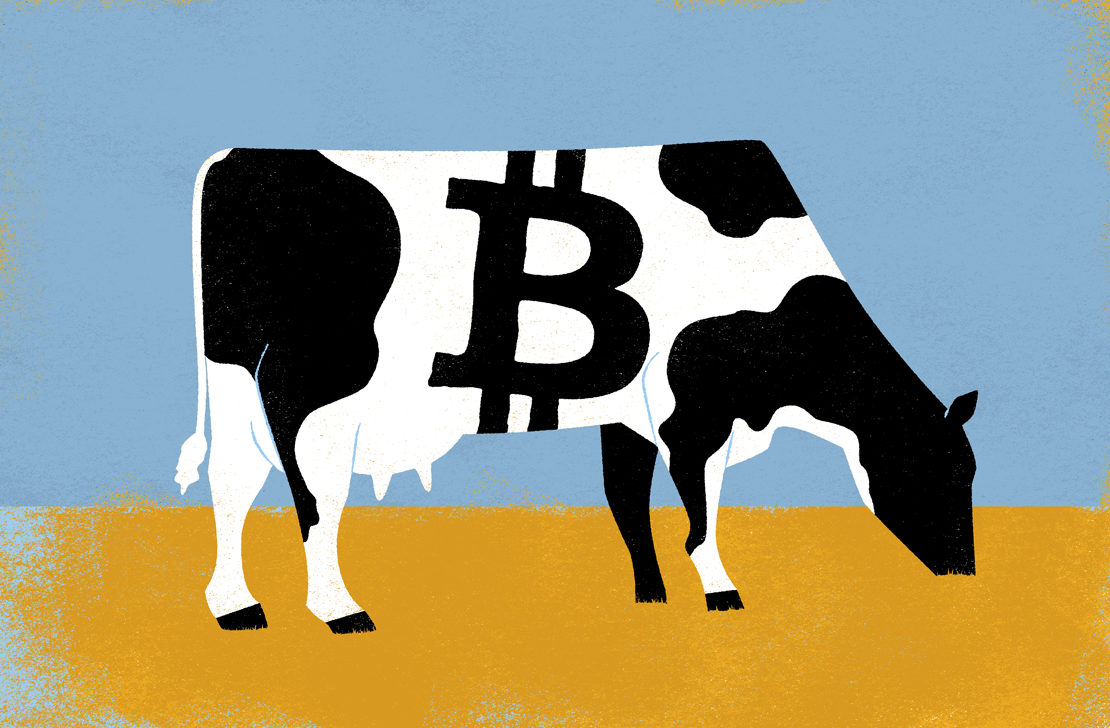Image result for cows vs bitcoins