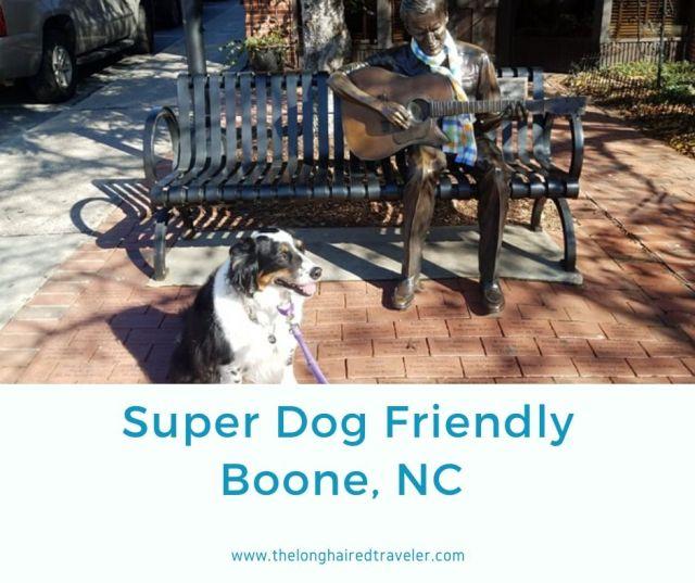 Super Dog Friendly Boone.jpg