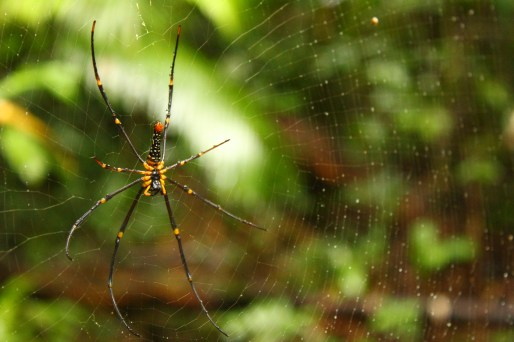 Huntsman spider!!