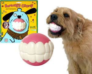 dog teeth