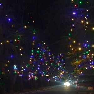 Christmas Tree Lane in Altadena (photo by Nikki Kreuzer)