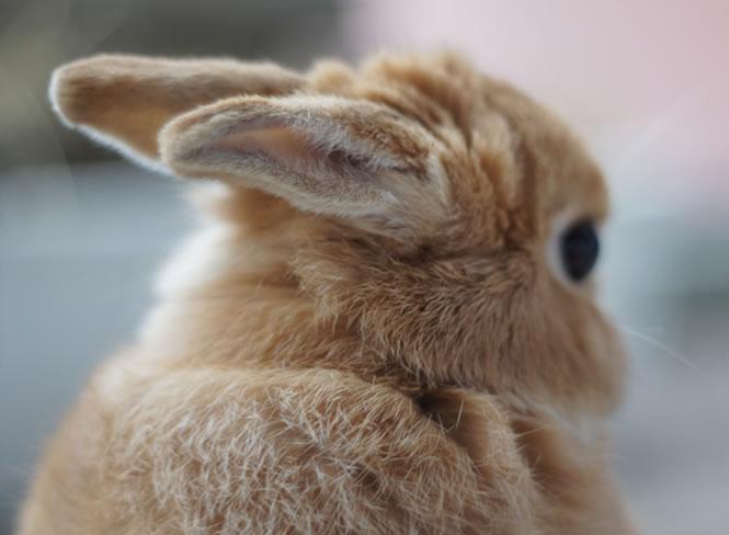 Love a bunny.